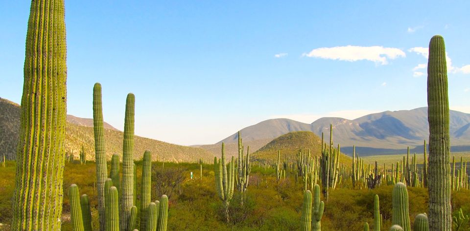 caminata valle cactus zapotitlan